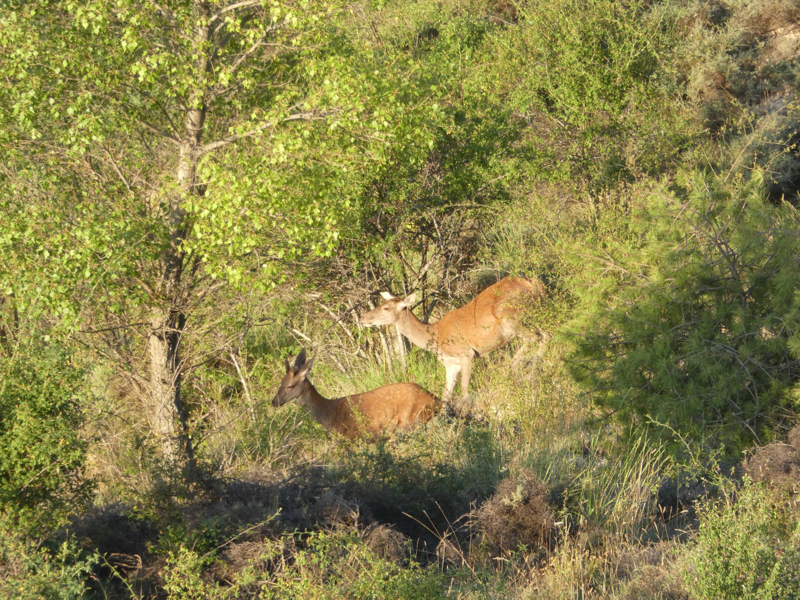 Primeros resultados del inventario de fauna en Peñalén (España)